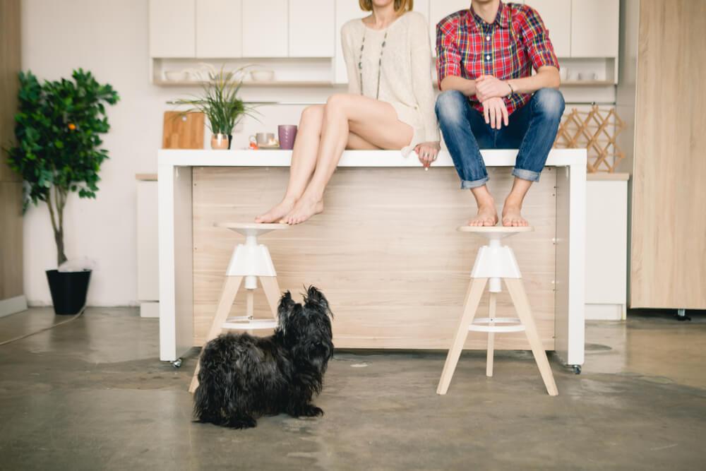 kobieta i mezczyzna siedza na blacie w kuchni z psem
