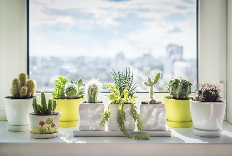 rośliny naparepecie