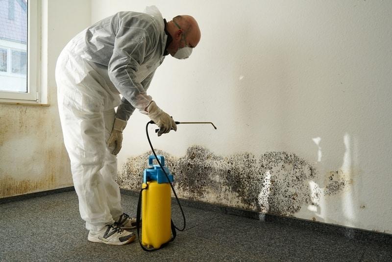 specjalista usuwający grzyb ze ściany