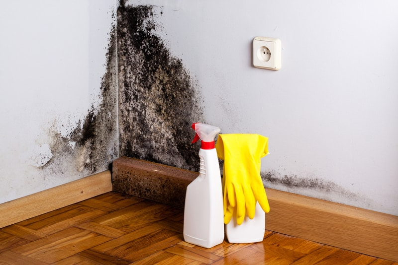 przygotowanie do usunięcia grzyba ze ściany