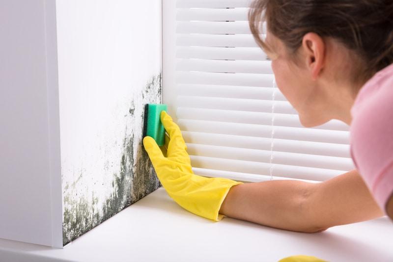 usuwanie grzyba ze ściany