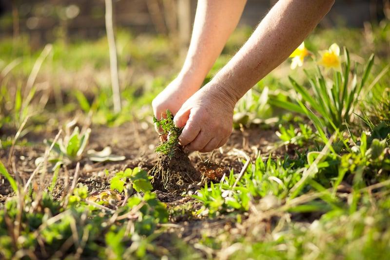 oczyszczanie ziemi wogrodzie