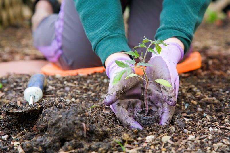 sadzenie roślin nawiosnę
