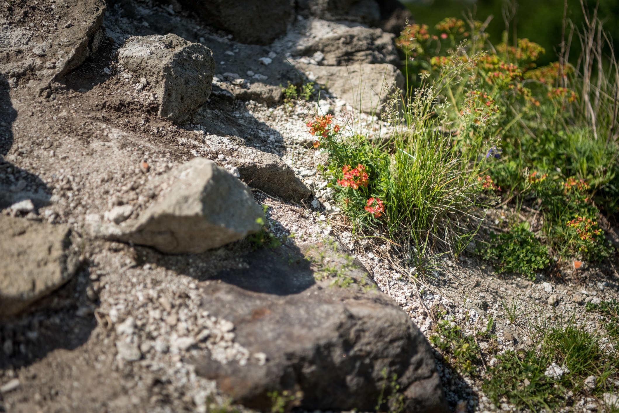 Fragment ogrodu skalnego