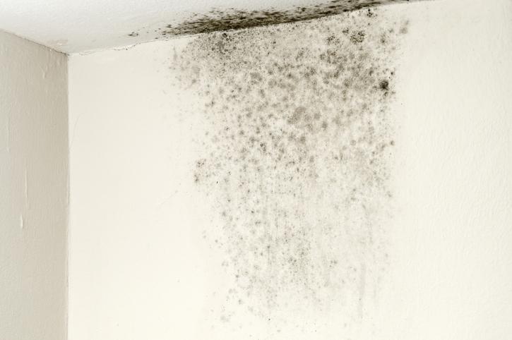 grzyb naścianie wmieszkaniu
