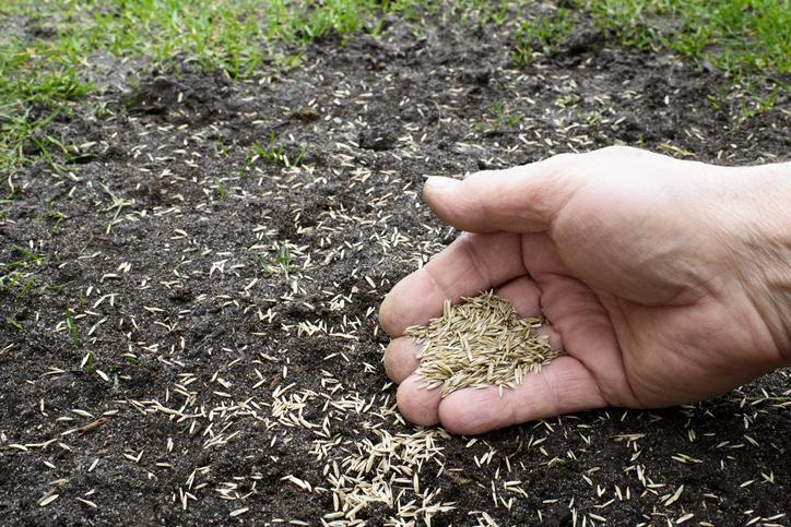 Dosiewanie trawy - kiedy i jak?