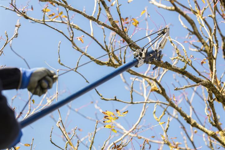 przycinanie drzew jesienią